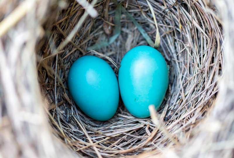 color-huevo