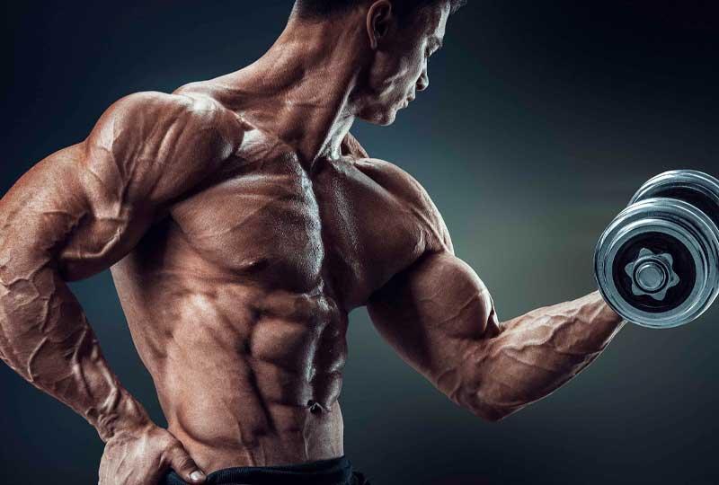 hipertrofia-y-musculos
