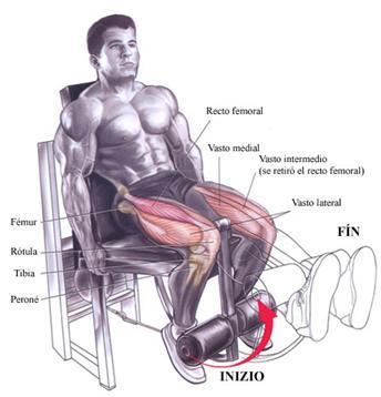 maquina piernas extension de piernas