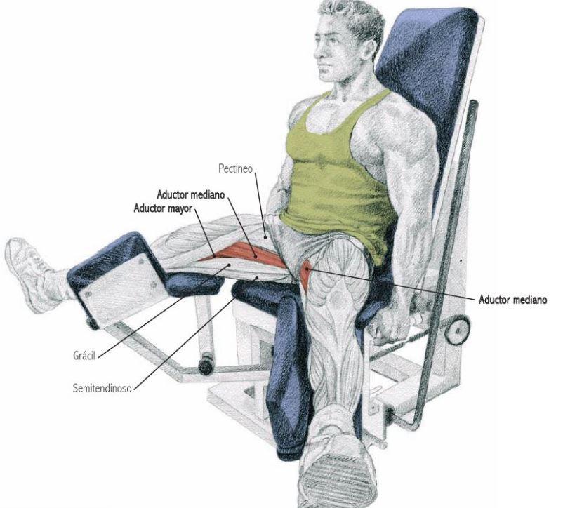 maquina piernas gym abductores aductores