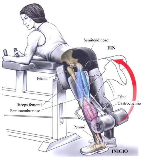maquina piernas gym curl femoral
