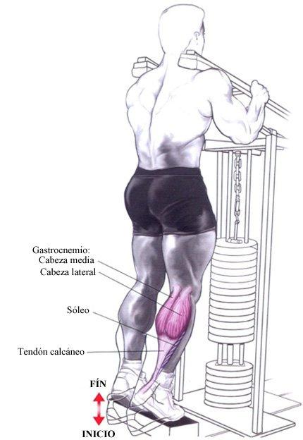 maquina piernas gym elevacion de talones