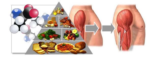 para que sirven los aminoacidos